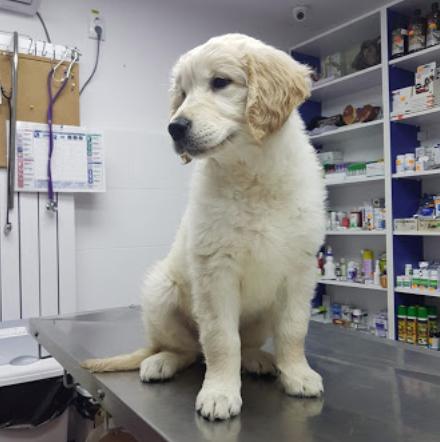 consultatii_tratamente_veterinar_pantelimon_442